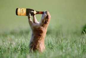 Most Funny Drunk Animals (7)