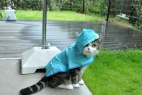 the-world_s-top-10-best-images-of-cats-avoiding-the-rain-101