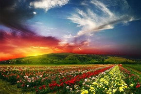 Nature___Seasons___Summer_Sunset_over_a_field_of_summer_flowers_078202_